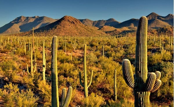 What to do in Tucson : Saguaro National Park
