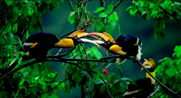 Our Planet - two tropical birds