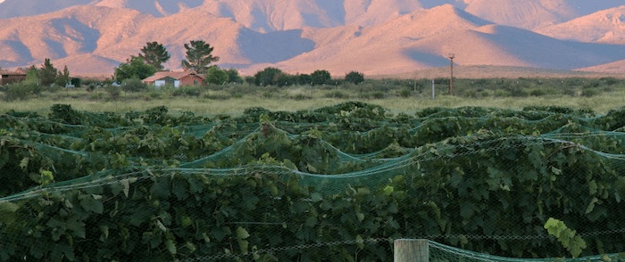 What to do in Tucson : visit a winery