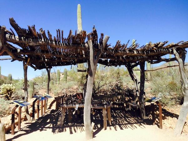 What to do in Tucson : Desert Musuem