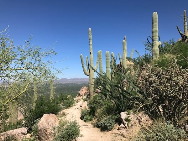 What to do in Tucson : hiking trails