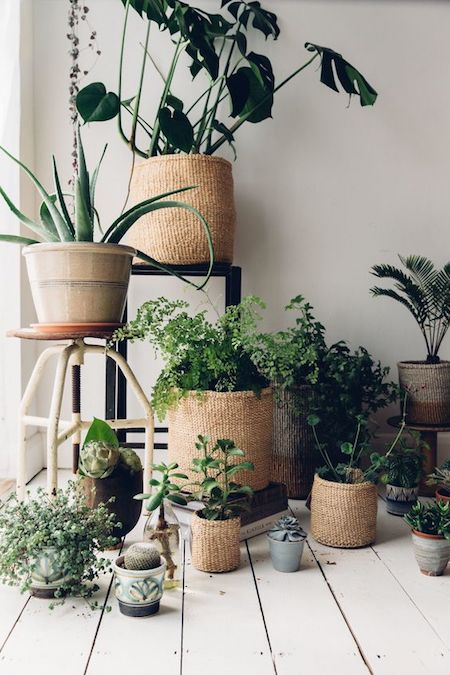 plants in basket