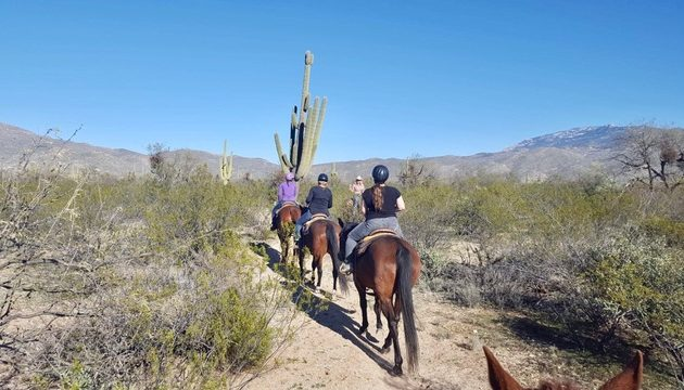 Horseback riding in Tucson, at the Saguaro National Park