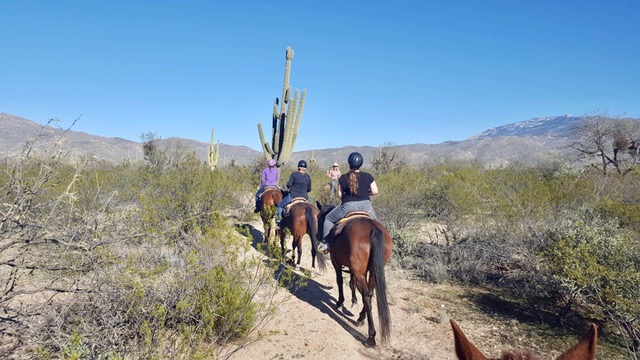 Horseback riding in Saguaro National Park Tucson