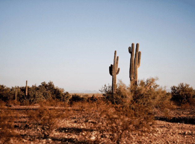 What to do in Tucson, Arizona – my Top 10!