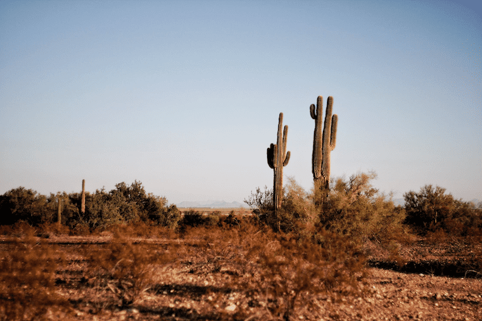 What to do in Tucson, Arizona